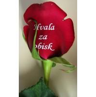 Potiskano cvetje - vrtnica